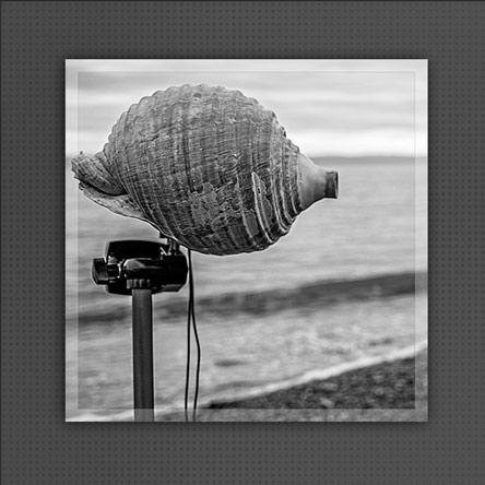 Seashell Resonance